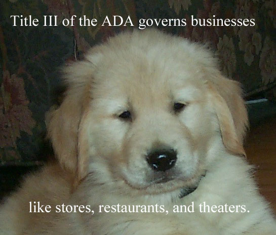 """Image: photo of irresistably cute golden retriever puppy with the words """"Title III of the ADA governs businesses like stores, restaurants, and theaters."""