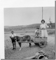 PCR-188 dog cart in Gaspe, PQ