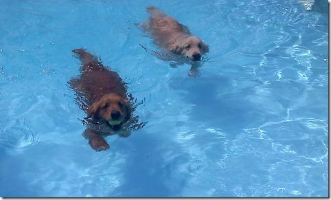 S&C swimming v3