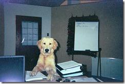 Chinook on desk