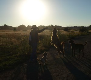 Woman and three dogs in the middle of a grassy area silhouetted against the sun.  The woman has a long plastic throwing device raised in her right hand with a tennis ball at the end.  One of the dogs is standing on his hind legs trying to reach the tennis ball.