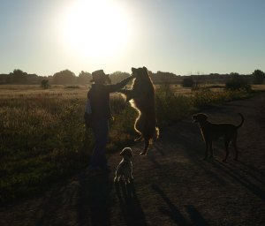 Woman and three dogs in the middle of a grassy area silhouetted against the sun.  The woman has a long plastic throwing device raised in her right hand with a tennis ball at the end.  One of the dogs has jumped into the air trying to reach the tennis ball.