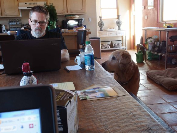 {Image:  in the left side of the photo, a man sits at a table working at a laptop computer.   To his right, a golden retriever stares intently at him.  The corner of another laptop shows in the foreground; kitchen appliances are in the background.  The table  has a candle, a water bottle, a card and envelope, a french press with tea and a mug,}