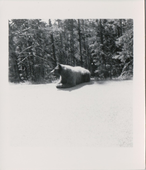 {Image: black & white photo of a large bear resting by the side of a wooded road.}