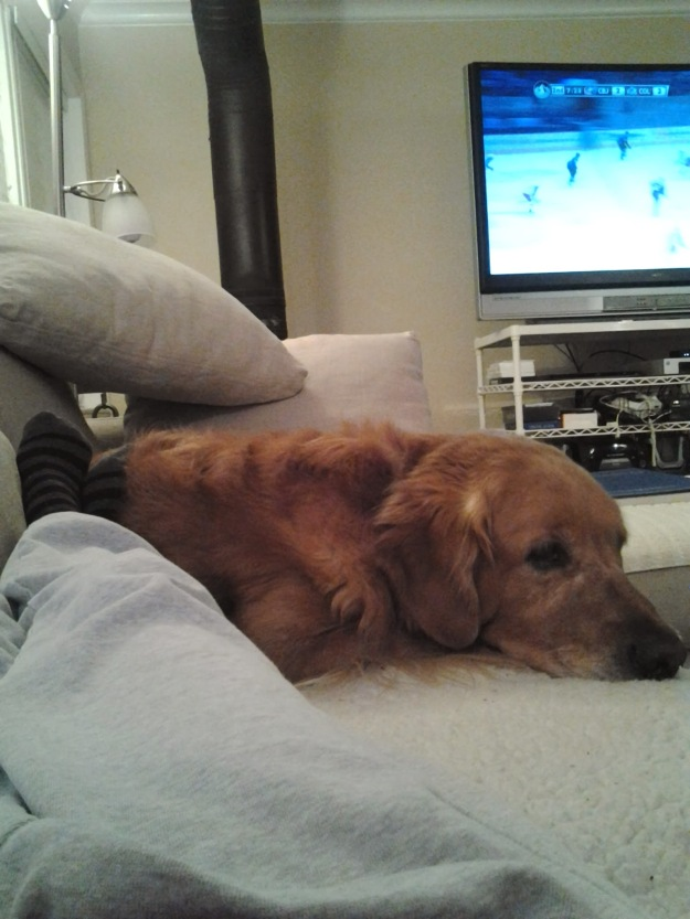 {Image:  a few of a sofa, dog and television from the perspective of the person stretched out in the sofa.  So along the left side, legs in sweatpants ending in feet in striped socks.  Next to the legs a golden retriever; in the background, a tv showing a hockey game.}
