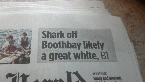 "{Image:  photo of newspaper headline, ""Shark off Boothbay likely a great white, B1.""}"