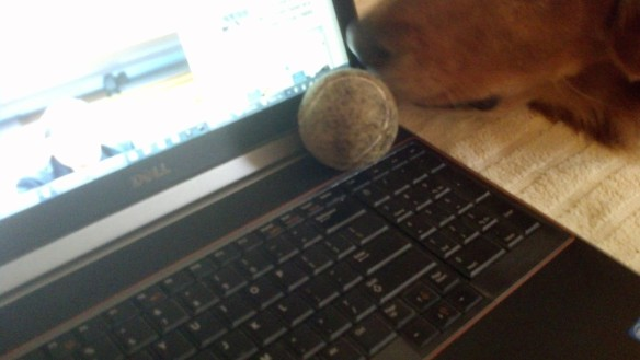 {Image:  photo of laptop keyboard.   In the upper right hand corner is a tennis ball and just to the right of that, a dog's nose.}