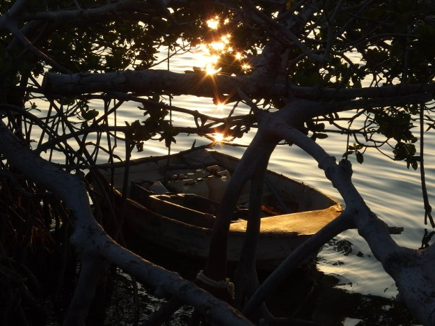 Image: abandoned skiff tied up under low hanging-branches, with setting sun reflected off the bow.