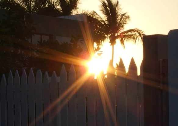 Image: setting sun flaring through the top of a picket fence, silhouetting a palm tree.
