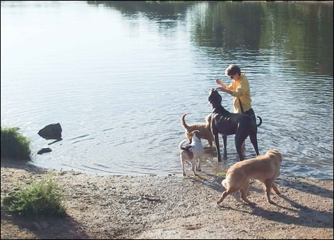 Image:  photo of woman in yellow fleece and khaki shorts standing in water, surrounded by a large grey great dane, a smaller golden-doodle, and the coon hound; the golden retriever watches from the shore.