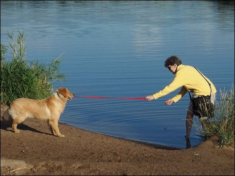 Image:  photo of woman in yellow fleece and khaki shorts standing in water holding the leash of a golden retreiver, attempting to urge the dog to come in the water.