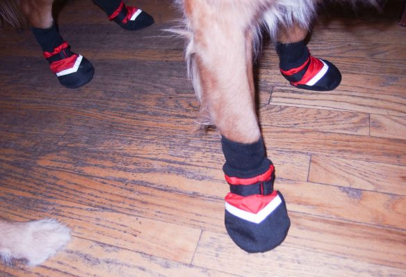 Image:  close up of dog paws in dog boots.