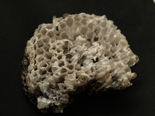 Image:  photo of a chunk of a wasp's nest sitting on a black background.