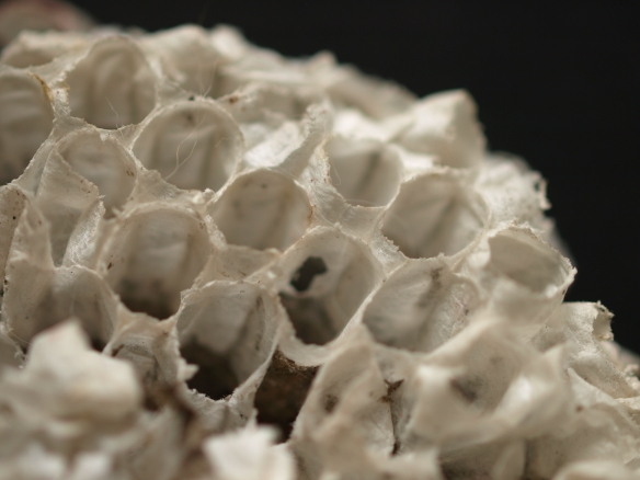 Image:  close-up of part of the wasp's nest.