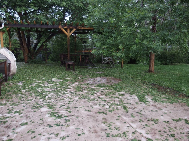 Image: concrete patio and pergola covered with wet, green leaves.