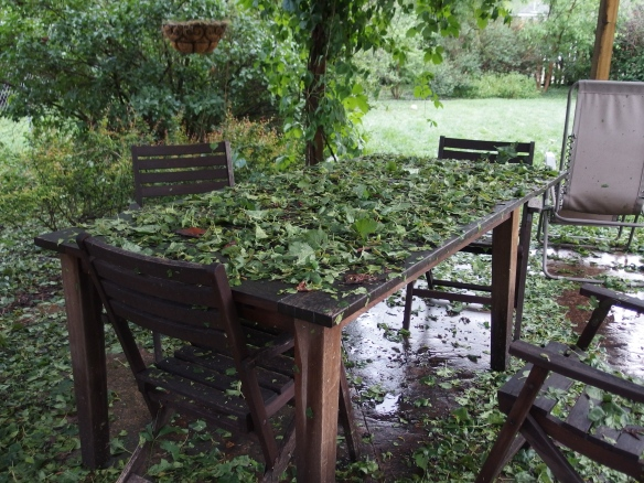 Image:  picnic table and chairs covered with wet, green leaves.
