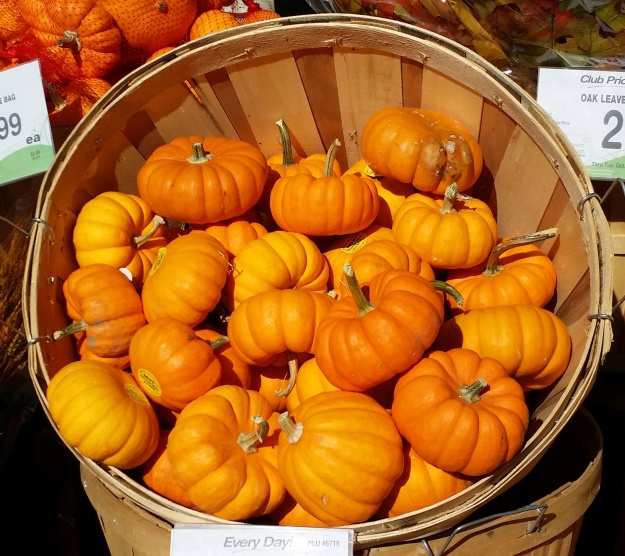 {Image: very small bright orange pumpkins in a basket.}