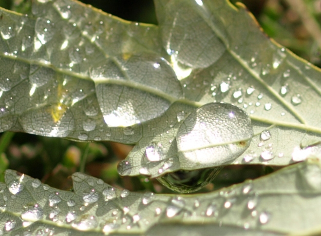 {Image: close up of leaf with dew drop.}