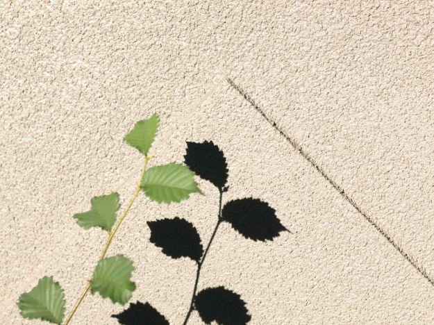 Image: thin stalk with four small leaves casting a sharp shadow against a stucco wall.