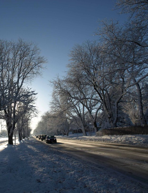 Image: Long shot along a street with snowy trees on either side and cars driving toward the photographer.