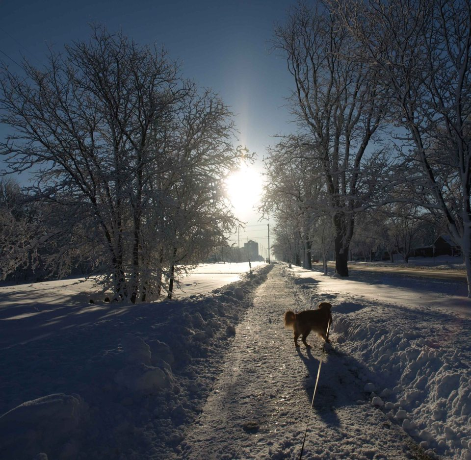 Image: Long shot along a plowed path next to the street with snowy trees on either side with the sun in the background and a dog in the foreground casting a long shadow toward the photographer.
