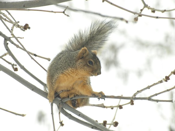 Image: squirrel on tree branch.