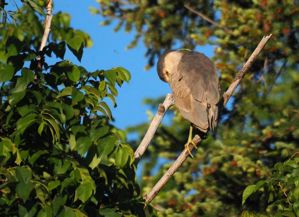 Image: gray-brown bird perched on a branch.